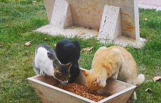 Çameli Belediyesi sokak hayvanlarına özel ilgi...