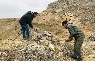 Ekipler, avcıların tuzaklarını bozuyor
