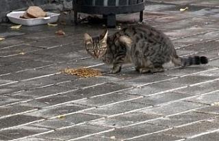 Fatih'te sokak hayvanları kısıtlamada unutulmadı