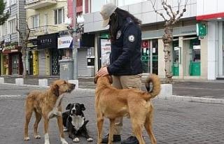 HAYDİ polisleri kısıtlamada sokak hayvanlarını...