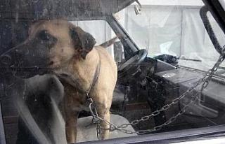 Köpeğini karavanda zincirle bağladı, gazetecilere...