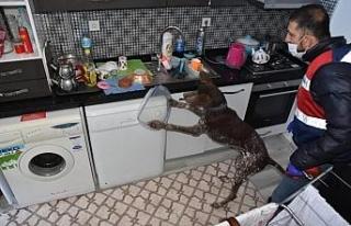 Köpek timi ile uyuşturucu operasyonu: 4 gözaltı