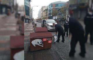 Odunpazarı Belediyesi sokakta yaşayan hayvanları...