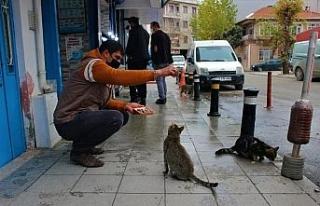 Sokak kedileri bu dükkanların açılmasını dört...