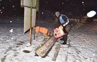 Kartepe Belediyesi sokak hayvanları için tüm önlemleri...