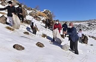 Vangölü aktivistleri Süphan Dağı eteklerine yaban...