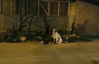 Adana'da yürekleri burkan görüntü