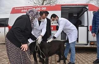 İzmit'in köylerinde sokak hayvanları aşılanıyor