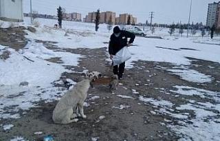 Niğde Belediyesi, sokak hayvanları için mama bıraktı