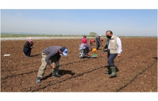 Mevsimlik tarım işçileri Bursa'ya geldi