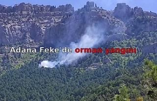 Adana Feke'de orman yangını