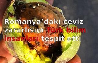 Romanya'daki ceviz zararlısını Türk bilim insanları...