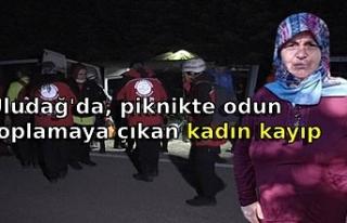 Uludağ'da, piknikte odun toplamaya çıkan kadın...