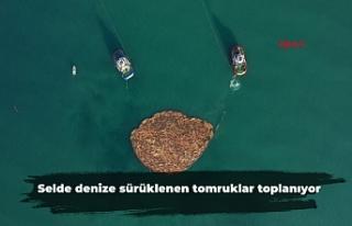 Selde denize sürüklenen tomruklar toplanıyor