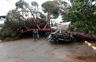 Aydın'da fırtınanın bilançosu; 7 yaralı,...