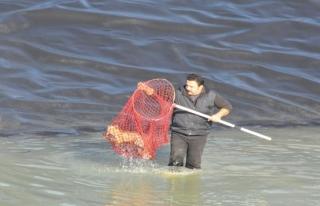 Gölette filelerle nefes kesen tilki kurtarma operasyonu