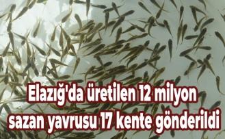 Elazığ'da üretilen 12 milyon sazan yavrusu 17 kente gönderildi