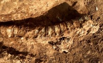 Yüz milyonlarca yıla ait olduğu düşünülen kalıntılar