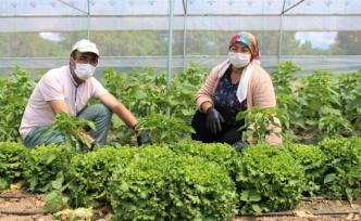 Özel sektördeki işlerini bırakıp çiftçi oldular