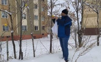 Kuşlar için ağaçlara elma astı