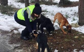 Sinop İl Özel İdaresi ağır kış günlerinde hayvan dostları unutmadı