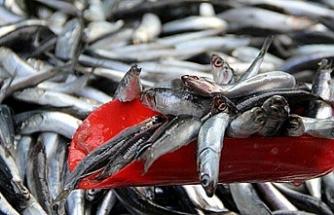Marmaralı balıkçıların yüzü gülmedi