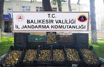 6 bin 300 zambak soğanı için 60 bin lira ceza