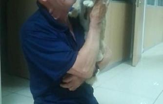 Çalınan köpeği bulununca gözyaşlarını tutamadı