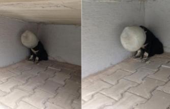 Başına bidon geçirilen köpek çaresizce yardım bekledi