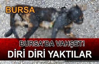 Bursa'da İnsanlık Dışı Olay!