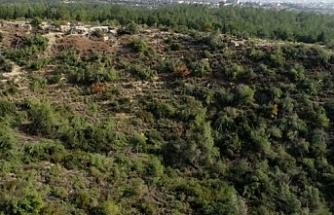 Bir gecede bin 511 ağacı kesen serbest bırakıldı! Tepki yağdı