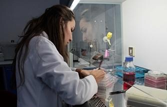 """""""Sığırların viral diyaresi"""" hastalığına yerli aşı geliştiriliyor"""