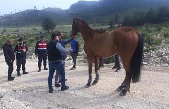Sahibinin elinden kaçan 100 bin liralık yarış atını jandarma buldu