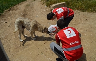 Türk Kızılay Bursa Şubesi, sokak hayvanlarını unutmadı