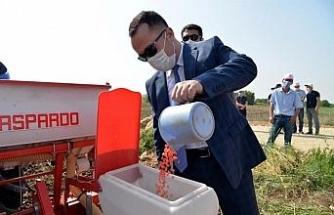 Yerli ve milli mısır tohumu 'Hacıbey' toprakla buluştu