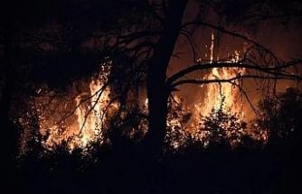 Çanakkale'de orman yangını (4)