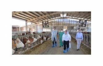Karacabey, modern çiftlikleriyle de markalaşıyor