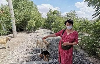 'Bahis için köpek dövüştürenler hayvanları parçalattırıyor'