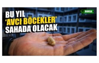 """Bursa ve Kütahya'yı birbirine bağlayan ormana """"avcı böcekler"""" salınacak!"""
