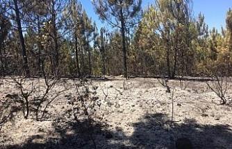 Kocaeli'de 20 dönüm ormanlık alan küle döndü