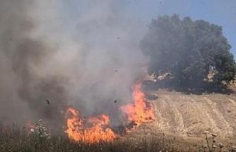 Silivri'de otluk alan yandı, meyve ağaçları zarar gördü