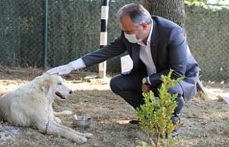 Tedavi altına alınan kanserli köpeğe Başkan Aktaş şefkati