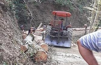 Ağacın altında kalan orman işçisi yaşamını yitirdi
