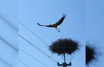 MEDAŞ'tan kuşlar ölmesin diye izolasyon uygulaması