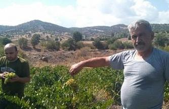 Yozgat'ta pekmez kazanları kaynamaya başladı
