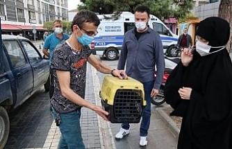 Yaralı sokak kedisi tedavi altına alındı