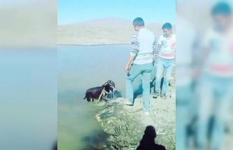 Yavru eşeği bağlayıp göle atan şahıslara para cezası