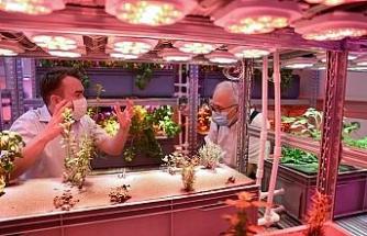 'Akıllı bahçe' Türkiye ikincisi