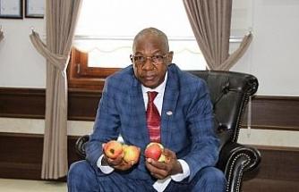 Amasya elmasına Afrika'dan talip çıktı