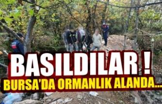 Bursa'da ormanlık alanda basıldılar !